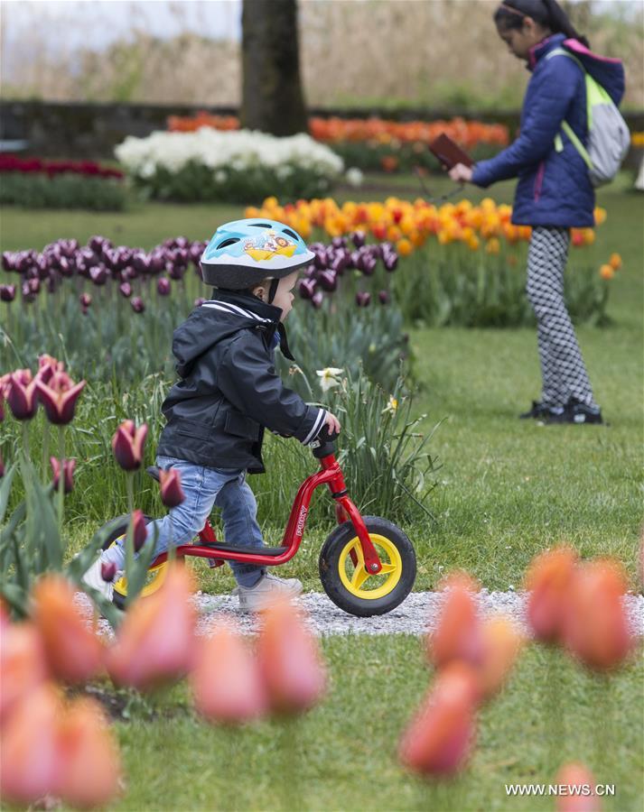 مهرجان توليب في سويسرا  138021545_15565176684781n