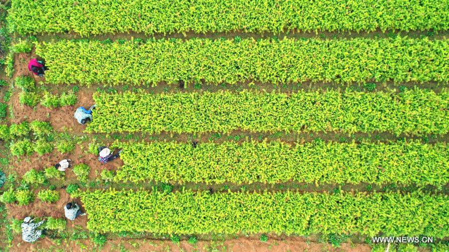الزراعة في الربيع